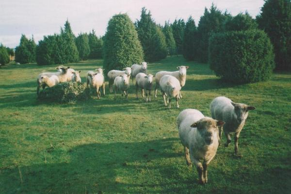 Kongi gård