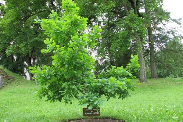 Der Park der Muttersprache in Väike-Maarja