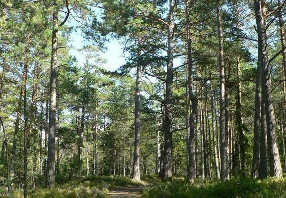 Harkun metsän luontopolku