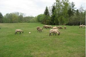 Allika Tourist Farm