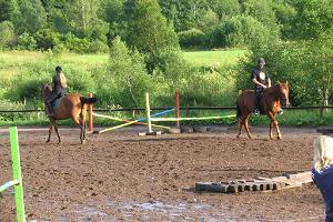 Ridgård Tobra Hobused (Tobra hästar)