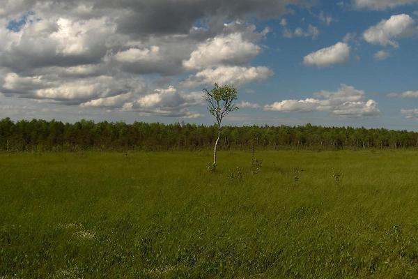 Поход по болоту на остров Ийрипиллисаар