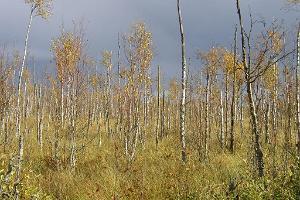 Peipsiveere naturskyddsområde