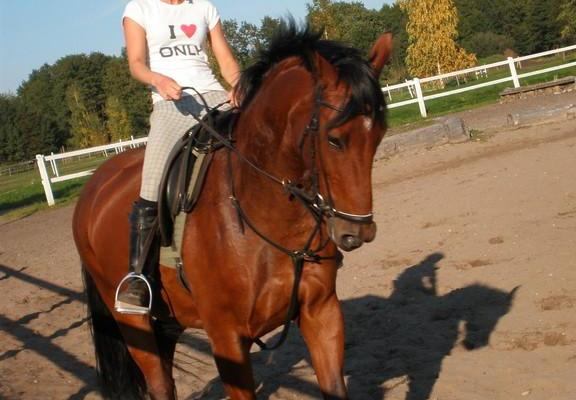 Zirgu izjādes centrs lauku sētā Sassi
