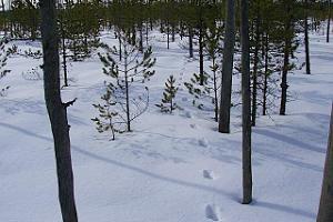 Suvised ja talvised räätsamatkad Valgesoo rabas