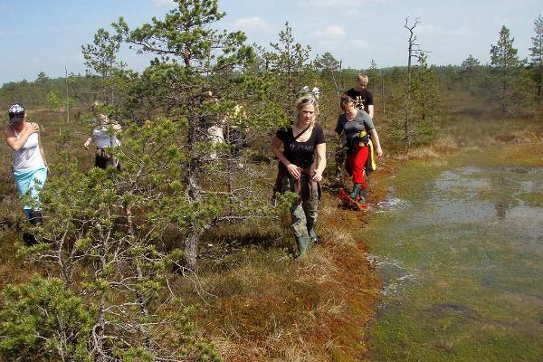 Suokenkäretket Koitjärven rämeellä