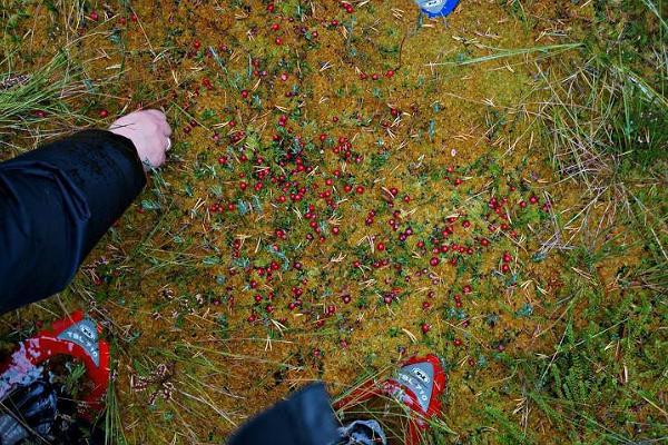 Summer and winter bogshoe hikes in Valgesoo bog