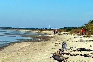 Reiu pludmale