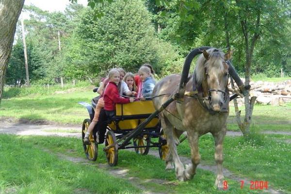 Arma Riding Farm