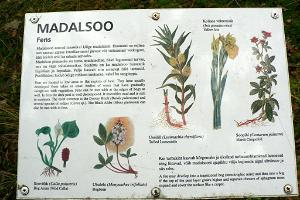 Majakivi-Pikanõmmen luontopolku