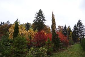 Järvselja växtgård