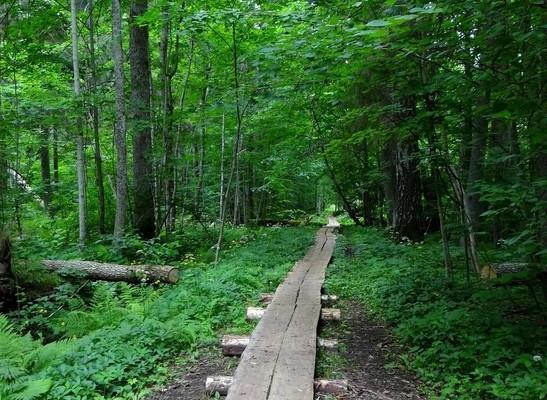 Природная учебная тропа в девственном лесу Ярвселья