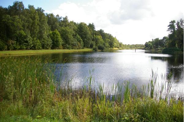 Rava tammik ja järv