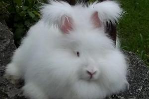 Visit to the Angorarabbitstours rabbit farm