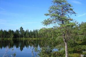 RMK Jalase nature trail in the Jalase landscape protection area in Rapla County
