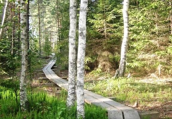 RMK Jalasen luontopolku Jalasen maastonsuojelualueella Raplamaalla