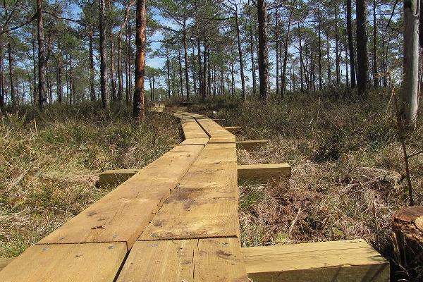 Kodru bog hiking track