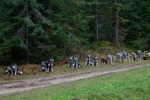 Slädhundsturer i Järvselja skogslandskap och i Peipsiveere naturskyddsområde