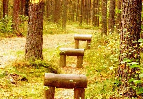 Waldrouten in Paralepa
