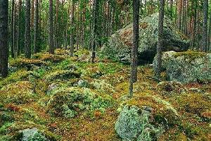 Kesmu akmeņu lauki