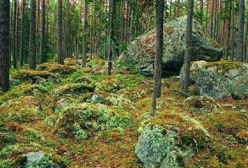 Findlingsfeld von Käsmu