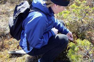 Seikkaile vapaaksi lumikenkäretki Soomaan kansallispuistossa sijaitsevalle Toonojan suosaarelle