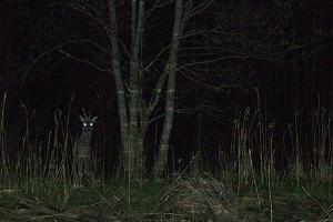 Soomaa.com öine kanuumatk Soomaal