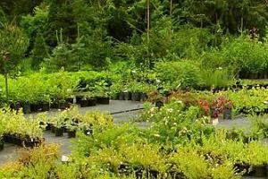 Das Arboretum von Luua