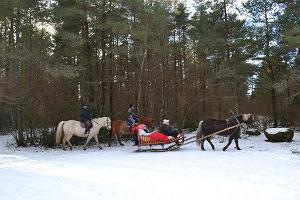 Hästturer till älvriket - med kälke, vagn eller på hästryggen