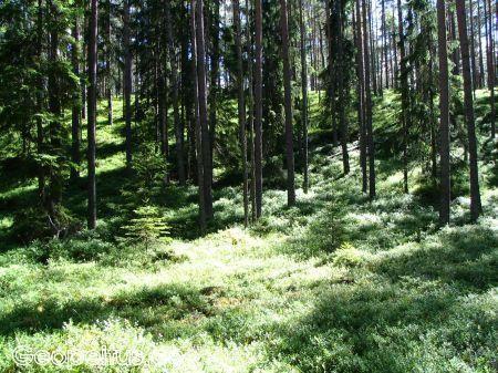Der Wanderweg Oandu-Võsu
