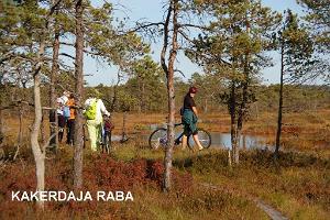 Туристическая тропа на болоте Какердая