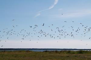 Segelbåtstur från Hapsal till Ormsö