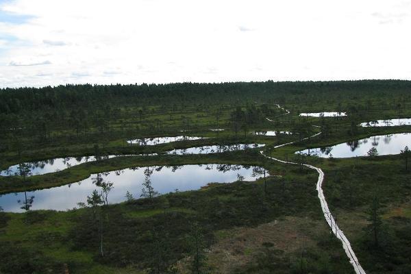 Das Hochmoor Mukri