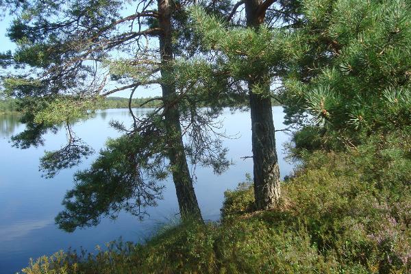 Udrikulauka wilderness hike on the trails of Kalevipoeg