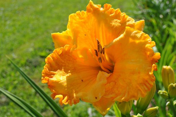 Elise Aed puutarha