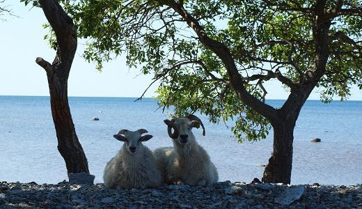 Ныва и полуостров Ноароотси