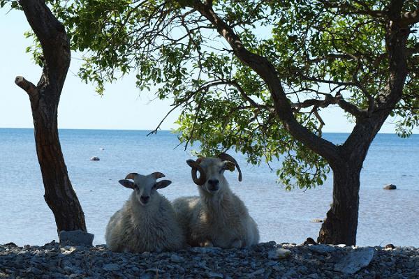 Nõva & die Halbinsel Noarootsi