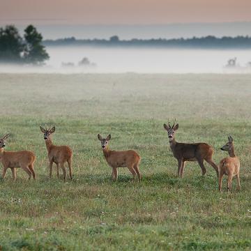 Matsalu national park, visitestonia