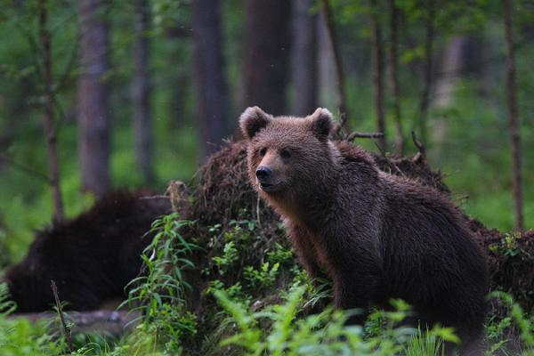The-wild-side-of-Estonia