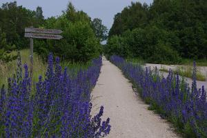Läänemaa Tervisetee (Läänemaan terveystie)