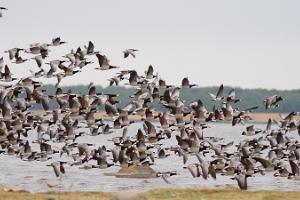 Natur-Vogelbeobachtungsturm bei Roomassaare