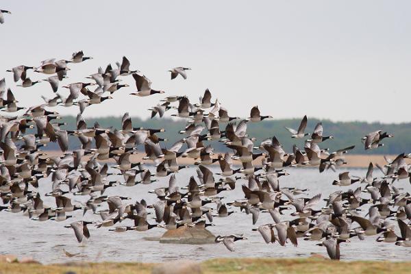 Haapsalu Tagalaht und der Vogelbeobachtungsturm auf der Promenade