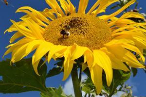 Kuressaaren puutarha- ja kukkapäivät