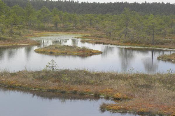 Endlan luonnonsuojelualue ja keskus Toomassa