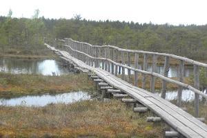 Study trail of the Männikjärv bog