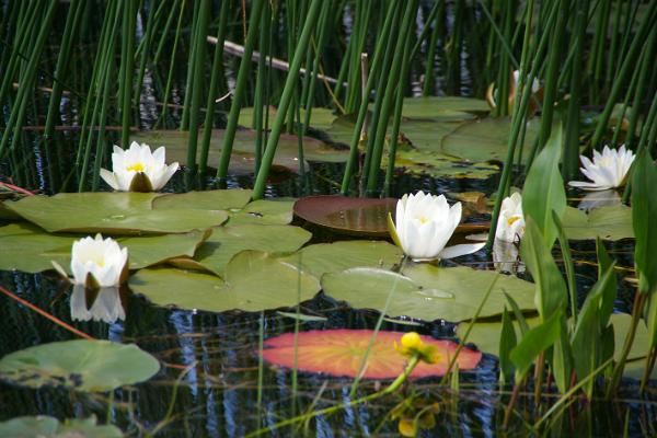 Der künstliche See von Paide