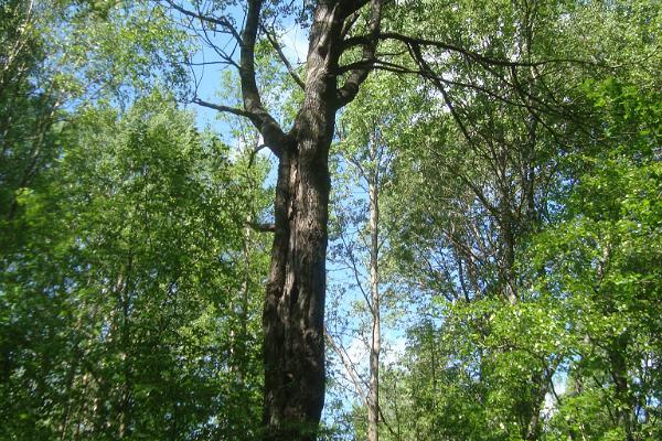 Urdasoo primeval nature trip along the trail of Fates