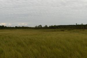 Virussaare bog hike along the ancient trails on bog shoes