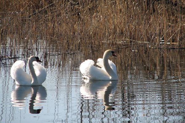 Der See Viljandi