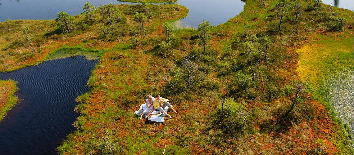 Estonians-are-moving-to-bogs